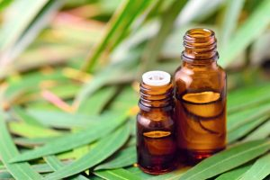 fresh eucalyptus Oil on fresh leaves for conscious skin care